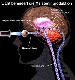 Medizinische Grundlagen der Lichttherapie: Melatonin